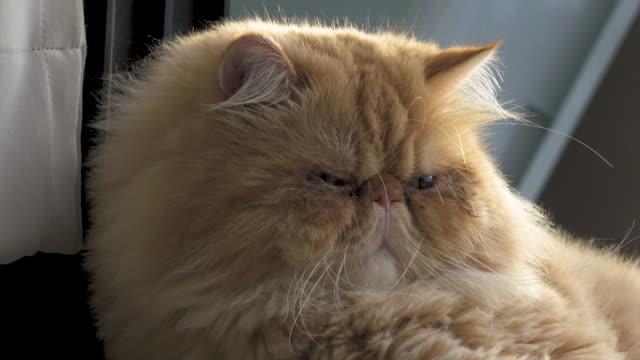 4K: Cat