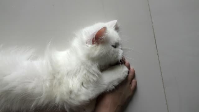 vídeos y material grabado en eventos de stock de cat - luchar