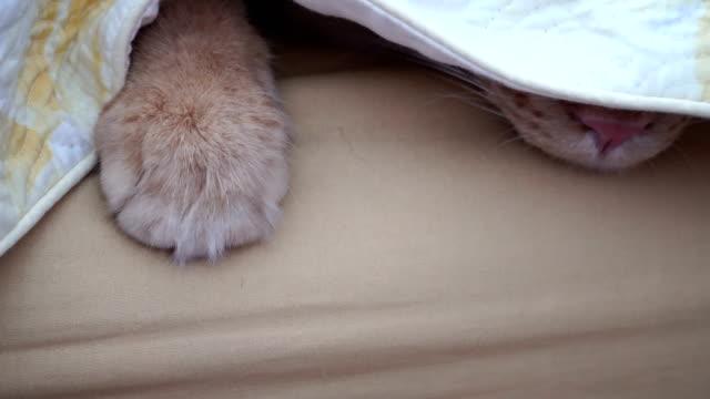vídeos de stock, filmes e b-roll de gato - pata com garras