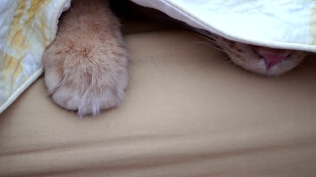 cat - pfote stock-videos und b-roll-filmmaterial