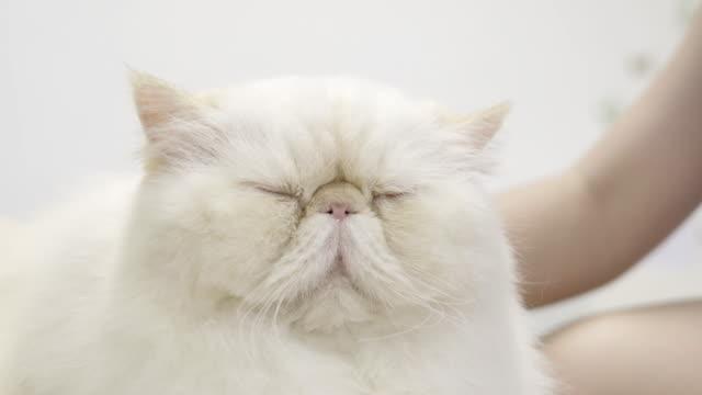 vídeos de stock, filmes e b-roll de gato - gato não domesticado