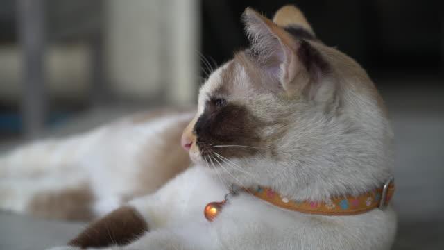 cat - 雑種のネコ点の映像素材/bロール