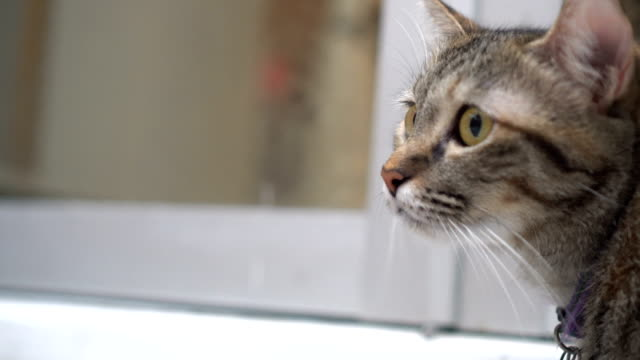 cat - mixed breed cat stock videos & royalty-free footage