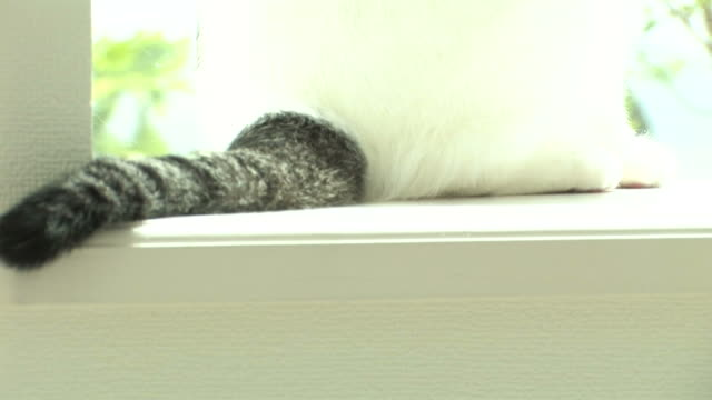 cu cat wagging tail - tail stock videos & royalty-free footage