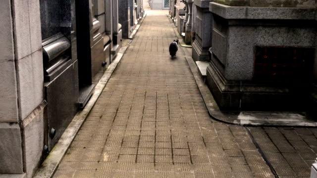 Cat walking in cemetery