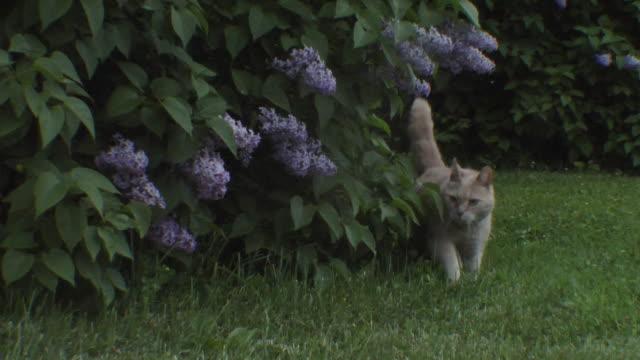 MS Cat walking in park / Visby, Nar, Ljugarn, Gotland, Sweden
