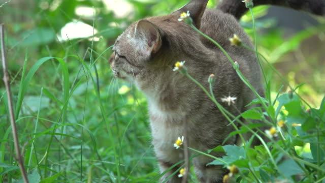 vídeos de stock, filmes e b-roll de gato caminhada no jardim - bigode de animal