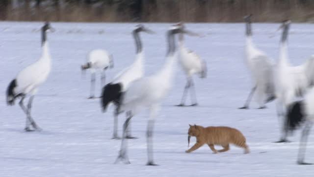 A Cat Walking Through Cranes With Holding A Fish In It's Mouth