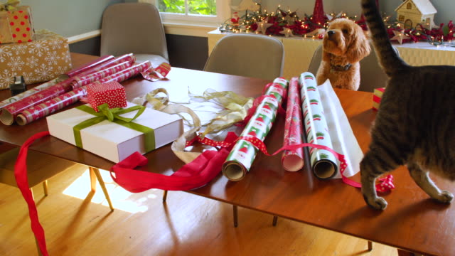 cat walking through the wrapping paper and  christmas packages while puppy watches - christmas wrapping paper stock videos & royalty-free footage