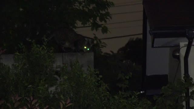vídeos y material grabado en eventos de stock de cat walks along top of wall at night. japan. - animales acechando