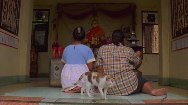 vídeos y material grabado en eventos de stock de cat wanders past women praying at buddhist shrine available in hd. - alfombra de oración