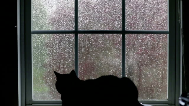 vídeos de stock e filmes b-roll de cat watching rain through window - chuva