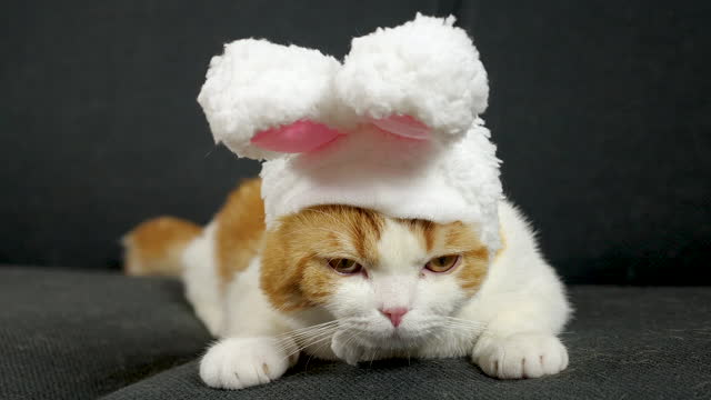 a cat wearing a rabbit costume - rabbit costume stock videos & royalty-free footage