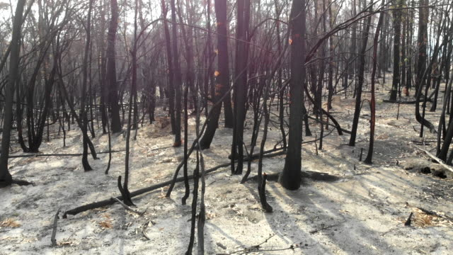 catastrophic fires - natural disaster stock videos & royalty-free footage