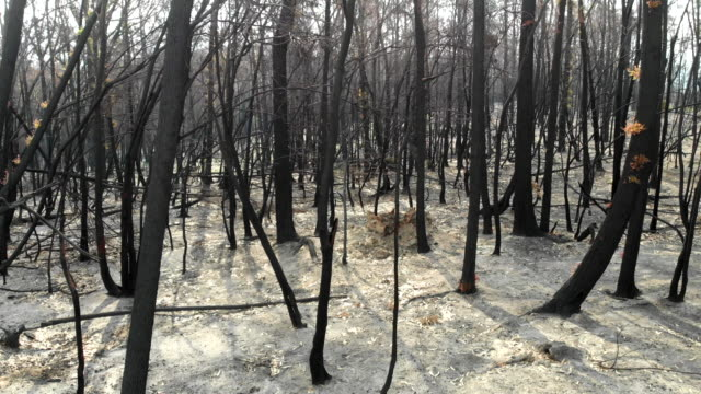 catastrophic fires - burnt stock videos & royalty-free footage