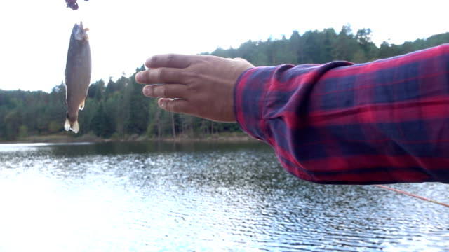 catch of fish - hook stock videos and b-roll footage