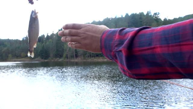 vídeos de stock e filmes b-roll de captura de peixe - captura de peixe