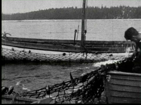 b/w catching big fish by net, united states / audio - anno 1920 video stock e b–roll