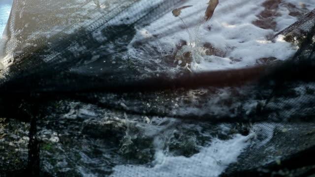 vídeos y material grabado en eventos de stock de captura de camarón - pescado y mariscos