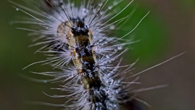 catepillar closeup