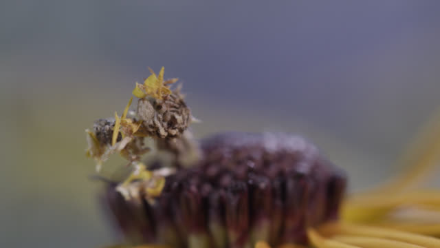 caterpillar attaches petals to itself - tarnung stock-videos und b-roll-filmmaterial