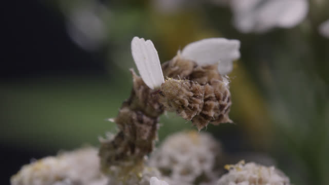 caterpillar attaches petals to itself - camouflage stock videos & royalty-free footage