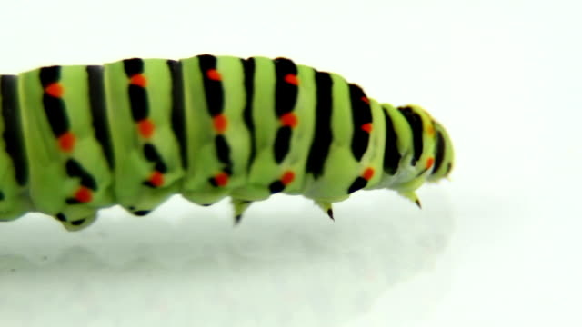 caterpillar crawling and defecating - defecating stock videos and b-roll footage
