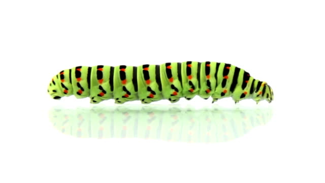 caterpillar crawling, loopable - worm stock videos and b-roll footage