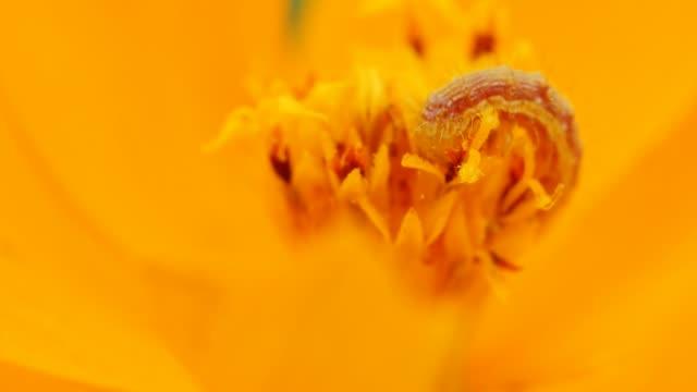 Caterpillar eating on flower.