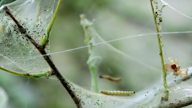 Caterpillar invasion auf Baum