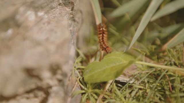 caterpillar on a blade of grass in summer - blade of grass点の映像素材/bロール