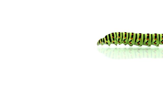 stockvideo's en b-roll-footage met caterpillar walking - pop