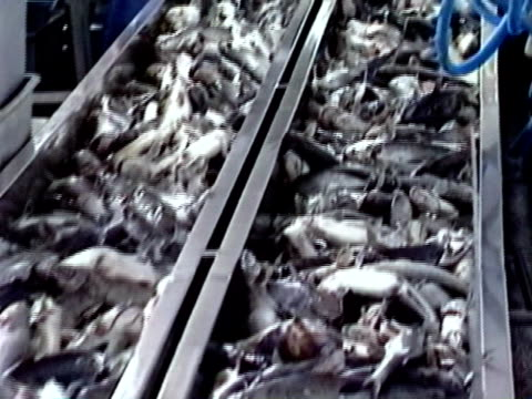 catfish entering a production plant - food processing plant stock videos and b-roll footage
