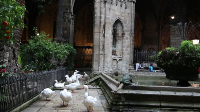 cathedral (cathedral of santa eulalia), fountain and geese in the cloister, barcelona, spain - ゴシック地区点の映像素材/bロール