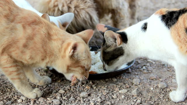 cats and dog eating together.