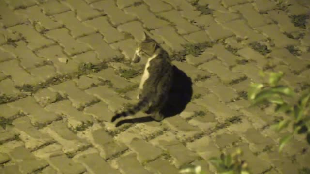 cats are mostly known as being a good hunter and the deeply ingrained hunting instinct of our favorite fourlegged friends doesn't become apparent... - four animals stock videos & royalty-free footage