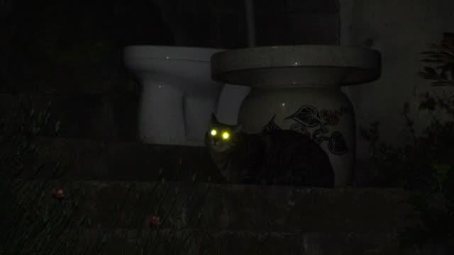 cat's eyes shine as it looks around at night, japan. - feline stock videos & royalty-free footage
