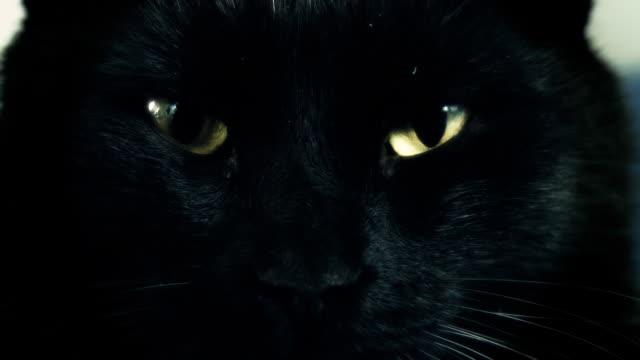 stockvideo's en b-roll-footage met hd: cat's eyes - extreme close up