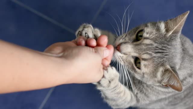 cats getting snacks - 逸楽点の映像素材/bロール