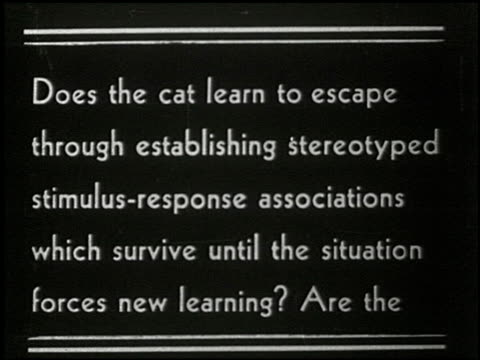 cats in a puzzle box - 1 of 17 - この撮影のクリップをもっと見る 2323点の映像素材/bロール