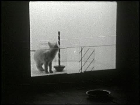 cats in a puzzle box - 2 of 17 - この撮影のクリップをもっと見る 2323点の映像素材/bロール