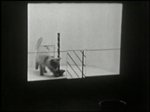 cats in a puzzle box - 8 of 17 - この撮影のクリップをもっと見る 2323点の映像素材/bロール