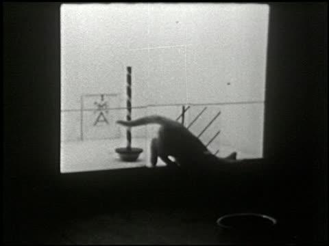 cats in a puzzle box - 9 of 17 - この撮影のクリップをもっと見る 2323点の映像素材/bロール