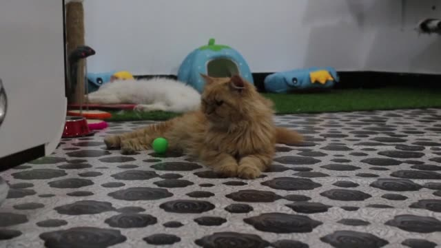 Cats in Iraq's southern city of Basra are purring with delight as the country's first feline hotel opens for guests