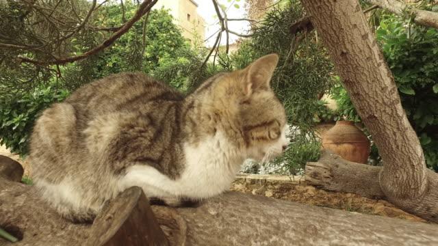 katzen in kasbah der udayas - festung stock-videos und b-roll-filmmaterial