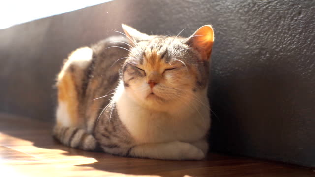 cats love to sunbath near window in the morning cold day - sunbathing stock videos & royalty-free footage