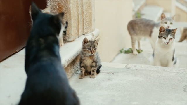 cats of rome - large group of animals stock videos & royalty-free footage