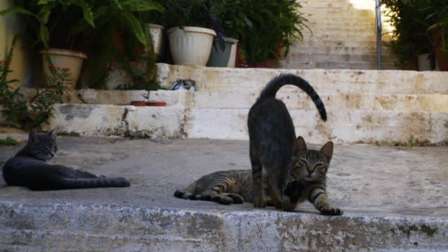 3 cats on the stairs - greece stock videos & royalty-free footage