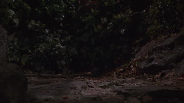 Cats running through a forest.