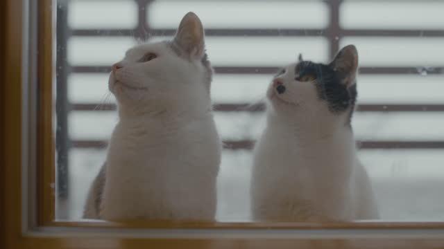 ガラスのドアのそばに座っている猫 - ショートヘア種の猫点の映像素材/bロール